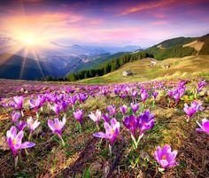 Mountain flower meadow