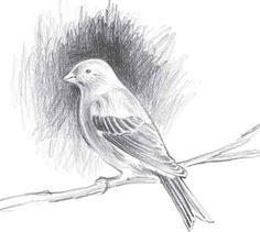 Drawing Pencil sketch