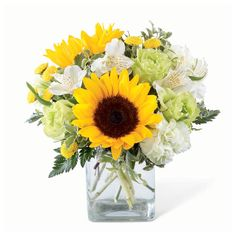Send a sunflower arrangement to a loved one with this bouquet of sunflowers, jade roses, light green carnations, & white alstroemeria inside a glass vase. Sunflower Arrangements, Sunflower Bouquets, Floral Bouquets, Floral Arrangements, Contemporary Flower Arrangements, Beautiful Flower Arrangements, Beautiful Flowers, White Flowers, Beautiful Things