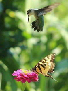 """""""I got here first!"""", said the butterfly."""