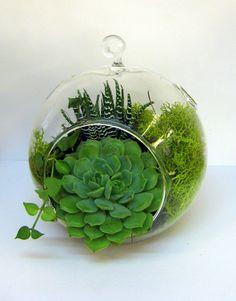 Succulent glass bowl terrarium, BotanicGifts.com