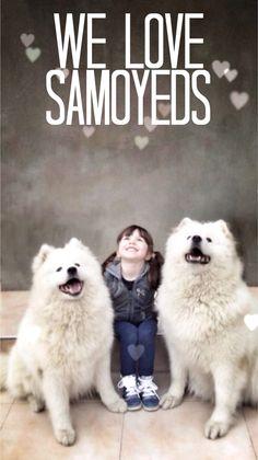 We Love Samoyeds