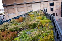 Piet Oudolf -The High Line is the reincarnation of an abandoned portion of elevated train track running through lower Manhattan. Envision a strolling gard...