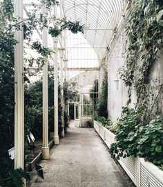 "toujoursdramatique: ""One of my favorite off-the-beaten-path spots here in Dublin. (at National Botanic Gardens of Ireland) """