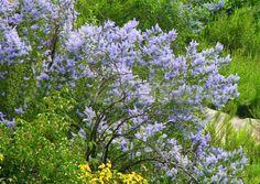 Rezervația de liliac Valea Oilor