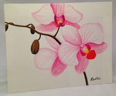 Orchids by MAXXTRAX77