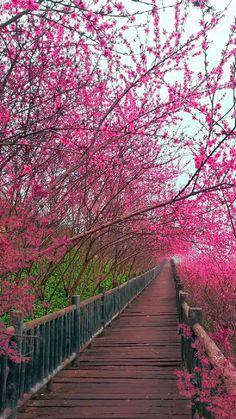 Beautiful Photos Of Nature, Amazing Nature, Beautiful Landscapes, Beautiful World, Beautiful Pictures, Beautiful Scenery, Scenery Pictures, Nature Pictures, Landscape Photography