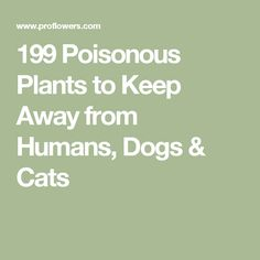 199 Poisonous Plants to Keep Away from Humans, Dogs & Cats