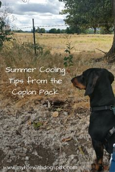 Tips to Cool Off Your Dog