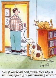 Good thing we don't have a cat - Cooper would be so upset!