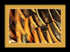 Nature Framed Print featuring the photograph Turkey Feathers Abstract by Sheila Brown