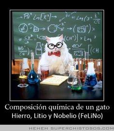 Composicion Quimica De Un Gato