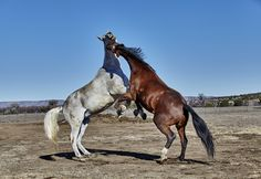 Is Your Horse a Pasture Bully? Here's What To Do About It.