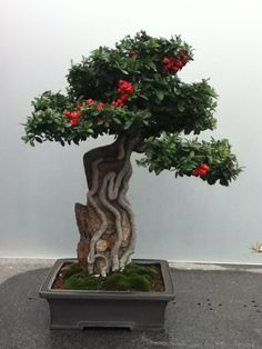 Bonsai At The Chicago Botanic Garden