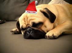 The Christmas season is a beautiful and contemplative time. In this article you can read useful tips for the Christmas time with your dog + an exclusive baking recipe.  Tonys-Dog-Blog.com
