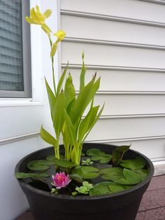 DIY Container Water Garden.  Recommended plants: canna lilies, dwarf papyrus and taro (for height); water lilies or lotuses (their leaves will cover much of the water surface from sunlight, preventing algae growth); water hyacinth and water lettuce (floaters); water mint (to cascade over the container's edge).