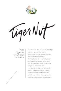 Wellness Encyclopedia: All About The Tiger Nut + A (Super) Easy Cookie Recipe