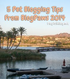 5 Pet Blogging Tips from BlogPaws 2014