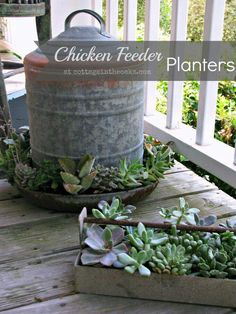 Chicken waterer and feeder gardens