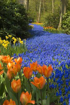 Welkom to the most beautiful spring garden in the world! @visitkeukenhof  #flowers #flowering #keukenhof