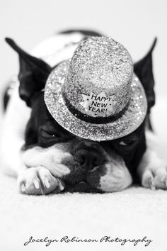 Sleepy New Year? Boston Terrier with a Happy New Year Hat! ► http://www.bterrier.com/?p=27826