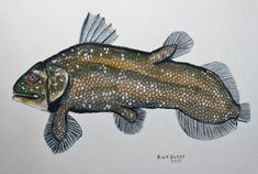 Coelacanth Living Fossil original painting by Goohsnest on Etsy