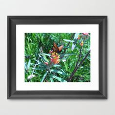 Butterfly on flower by Sarah Shanely Photography $31.00