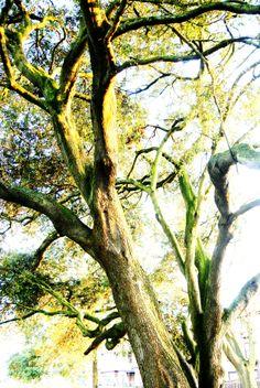 Albion Anecdotes: Photo #tree #sun