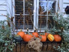 Festive fall window box