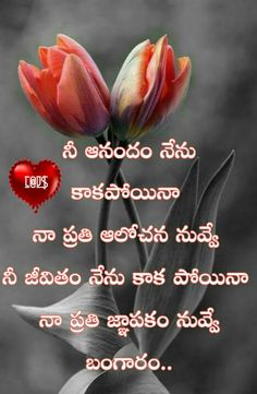 Love Meaning Quotes, Meant To Be Quotes, Love Quotes With Images, Meaning Of Love, Love Quotes In Telugu, Telugu Jokes, Good Morning Quotes, Cute Baby Animals, Positive Quotes