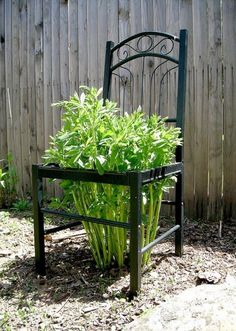 22 Cool Chair planter ideas for Home and Garden This chair planter ideas for home and garden post is a guest blogger submission. Do you like to have unique and different things in your home and gar…http://livedan330.com/2016/02/18/22-cool-chair-planter-ideas-home-garden/
