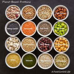 A Guide to Plant-Based Protein – Part 2