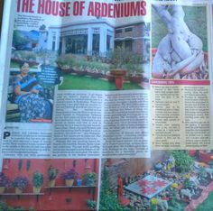 https://anecdotesofmylife.wordpress.com/2016/01/23/my-article-in-the-times-of-india-1-the-house-of-adenium/