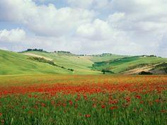 Poppy field in tuscany $29.99