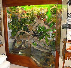 suger glider custom cage | Live Plants Lagoon terrarium
