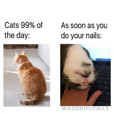 Makeuphall: The Internet`s best makeup, fashion and beauty pics are here. Cute Animal Memes, Animal Jokes, Cute Funny Animals, Cute Baby Animals, Funny Cute, Funny Cat Memes, Stupid Memes, Funny Relatable Memes, Stupid Funny