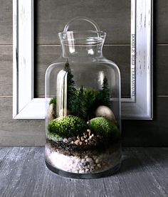 Nestled inside a crystal clear glass vessel is a moss-veiled path of natural stones winding up to secret groves of wooded landscape. This miniature forest scene is comprised of 2 varieties of moss and faux pine trees. Regular room lighting is sufficient; do not place in direct sunlight.  Features: • Measures approx. 8 tall by 5 wide • Easy care; no sun/fertilizer required • Comes with detailed plant care instructions • FREE mini spray bottle • Ships via USPS Priority Mail with tracking…