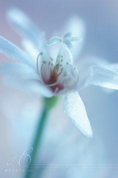 macro – Flowers – B R U N A S . N L