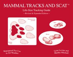 This handy waterproof field guide is designed to be carried through brush, bramble and snow banks, and emerge unscathed.  It uses a novel three-step process to identify tracks of 29 different animals that are commonly encountered in the field.  First a movement pattern is determined, then the group is identified and finally the species is pinpointed.  For scat first a basic shape is identified, then the categories are divided into more detailed shapes and finally the species is identified…