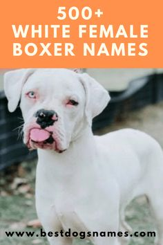 White Female Boxer Dog Names, Puppies Names Female, Boxer Dog Names, Female Dog Names, Dog Names Unique, Best Dog Names, Cute Boy Puppy Names, Female Boxer Dog, Dogs Names List, Girl Boxers
