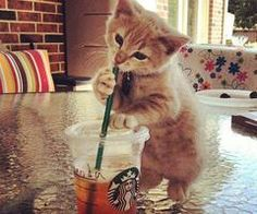 if Harley was to have a kitten this is what it would look like