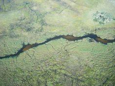 Okavango Fly in Safari