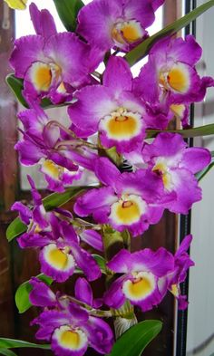 BEAUTY OF FLOWERS AND PLANTS - other flowers - Community - Google+