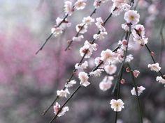 Flores de macro - Papel de Parede Grátis para PC: http://wallpapic-br.com/paisagens/flores-de-macro/wallpaper-23608