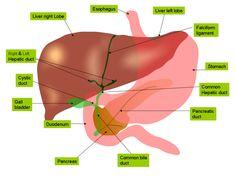 Tratamientos naturales para el hígado graso (esteatosis hepática)
