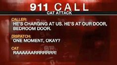 """I don't know whether to laugh or if it's a face-palm moment... A US family and their dog were forced to call police for rescue when a huge cat with """"a history of violence"""" trapped them in a bedroom of their Portland home."""