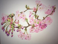 Cherry Blossom by Karen McKenzie - Win vouchers worth from Winsor & Newton in our Calendar Challenge - February 2020 Cherry Blossom, Competition, Floral Wreath, Challenges, Artist, Palette, Colour, Inspiration, Color