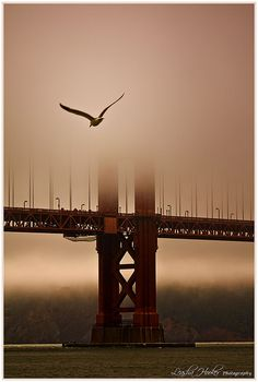 Golden Gate Bridge shrouded in a sea of fog and mist with a Seagull soaring in the foreground. The epitome of San Francisco. Places To Travel, Places To See, Beautiful World, Beautiful Places, Simply Beautiful, Fog Photography, Travel Photography, Magic Places, San Francisco