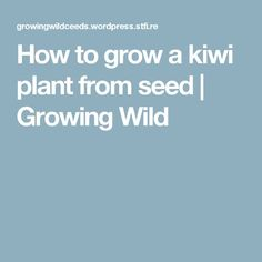 How to grow a kiwi plant from seed | Growing Wild