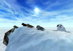 Wat zijn dat voor schattige beestjes op het ijs?    antwoord : zeeehondjes